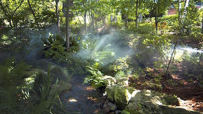 Mist In The Palmer Fern Dell